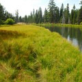 Deschutes River near 'Big Tree.'- Big Tree Ponderosa Pine