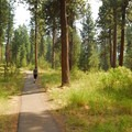 Paved trail to 'Big Tree.'- Big Tree Ponderosa Pine