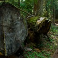 - McKenzie River Trail