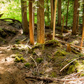 The trail is excellent for mountain bikes as well.- McKenzie River Trail