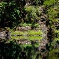 Tamolitch Pool.- McKenzie River Trail