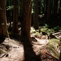"""The woods are lovely, dark, and deep....""- McKenzie River Trail: Carmen Reservoir to Tamolitch Pool"