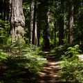 Prime Oregon old-growth.- McKenzie River Trail: Carmen Reservoir to Tamolitch Pool