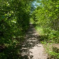 The first mile of the trail is on an abandoned forest road.- Table Rock