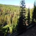 Overlooking Annie Creek Canyon from the Mazama Village Campground.- Mazama Village Campground