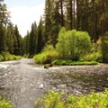 The Metolius River near the trailhead.- Metolius River Trail West