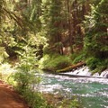 Gushing spring.- Metolius River Trail West