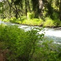 Scenic riverside trail.- Metolius River Trail West