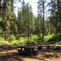 Camp Creek campsite.- Metolius River Trail West