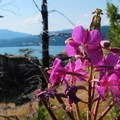 Unidentified species (help us identify it by providing feedback).- Government Cove Peninsula