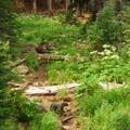 A dry creekbed along Godfrey Glen Hiking Trail.- Godfrey Glen Loop Trail