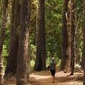 Godfrey Glen Hiking Trail.- Godfrey Glen Loop Trail