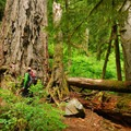 Outdoor Project team member Tyson Gillard admiring the old-growth forest. - Lewis River Falls