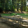 Fir Grove Picnic Area at Molalla River State Park..- Molalla River State Park