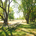 The main picnic area near the boat ramp at Molalla River State Park.- Molalla River State Park