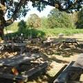 Picnic area under the shade of an Oregon white oak at the Manson Barn.- Champoeg State Park