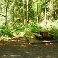 A picnic area at Packsaddle County Park.- Packsaddle County Park