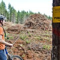 Clearcuts keep the trail network in a constant state of flux.- Dallas Trails
