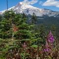 Mount Hood (11,250') with red willowherb (Chamerion latifolium).- Gunsight Ridge Trail