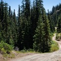 The forest road leading to the Gunsight Ridge Trail.- Gunsight Ridge Trail