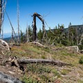 The top of the ridge and the beginning of a truely fantastic descent.- Gunsight Ridge Trail
