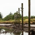 Low tide on the North Fork of the Nehalem River.- North Fork of the Nehalem River