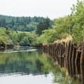 The North Fork of the Nehalem River.- North Fork of the Nehalem River