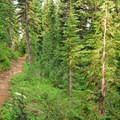 The beginning of the trail through a forest dominated by noble fir and mountain hemlock.- Jefferson Park Hike via Park Ridge