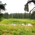 Unnamed adjacent lake and marsh at Breitenbush Lake Campground.- Breitenbush Lake Campground