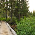 Bridge to walk-in campsites.- Breitenbush Lake Campground