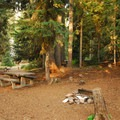 Typical campsite.- Lower Lake Campground