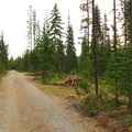 Gravel road through campground.- Olallie Meadow Campground