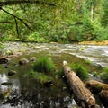 The Clackamas River from Riverford Campground.- Riverford Campground