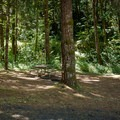 Typical campsite at Fisherman's Point.- Fisherman's Point Group Campground