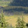 - Bird Creek Meadows