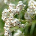 Unidentified species (help us identify it by providing feedback).- Bird Creek Meadows