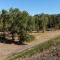 The trails just below Dexter Dam.- Dexter State Recreation Site