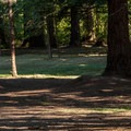 The disc golf course at Dexter State Recreation Site.- Dexter State Recreation Site