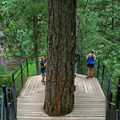 The tree fort viewing platform lies at the bottom of some 100 steps.- Toketee Falls