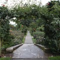 Looking over the International Rose Test Garden tiers.- International Rose Test Garden