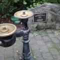 Picnic area at Hoyt Arboretum.- Hoyt Arboretum