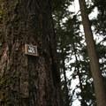 Trail markers at Hoyt Arboretum.- Hoyt Arboretum