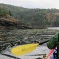 Kayaking in the abundant kelp.- San Juan Island, Sea Kayaking Smallpox Bay to Deadman Bay