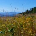 Wildflowers at Lime Kiln Point.- San Juan Island, Lime Kiln Point State Park