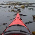 Tasty kelp snacks.- Orcas Island: Fishing Bay Paddle