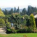 The view toward downtown Portland and Mount Hood (11,249').- Washington Park