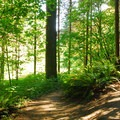 Trails within Hoyt Arboretum.- Washington Park