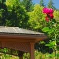 International Rose Test Garden.- International Rose Test Garden
