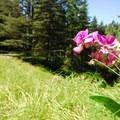 Hoyt Arboretum along SW Fischer Lane.- Hoyt Arboretum