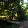 Along one of the many trails within Hoyt Arboretum.- Hoyt Arboretum